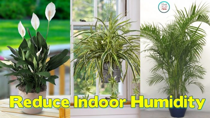 How to Reduce Home Humidity; Indoor Plants Are Useful in Reducing Indoor Humidity
