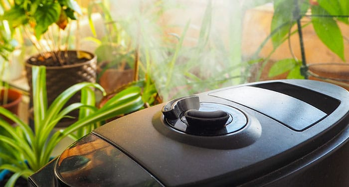12 Cunning Tricks of Humidifying a Room Naturally
