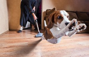 Understanding Why Your Dog Hates Vacuums & How to Deal with It!