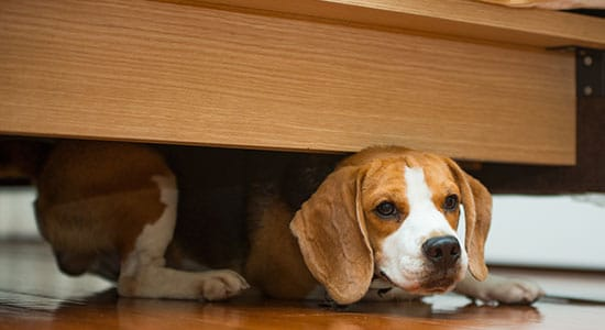 Hiding Under Furniture: