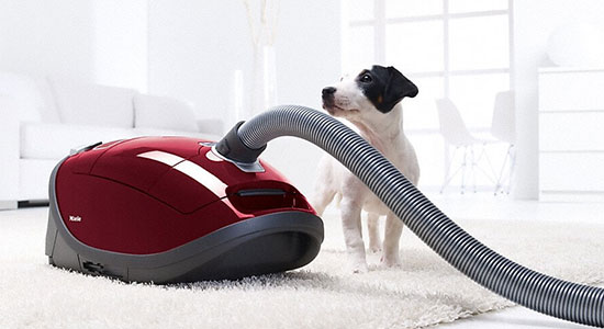 Allow Your Pet to Investigate the Vacuum: